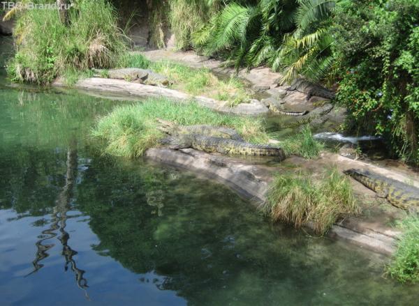 а-а-а крокодилы,бегемоты..