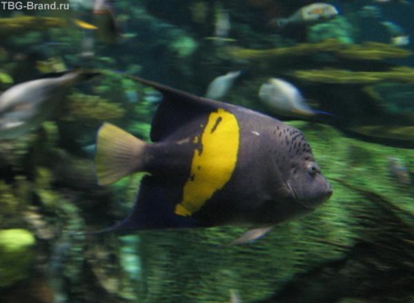Один из обитателей подводного мира