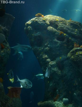 Романтика под водой))
