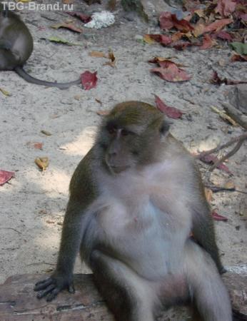 ...жертва тайского фаст-фуда....