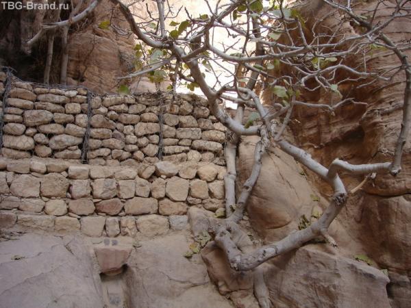 И на камнях растут деревья - правда.
