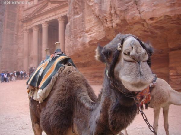 Как дела, верблюд?