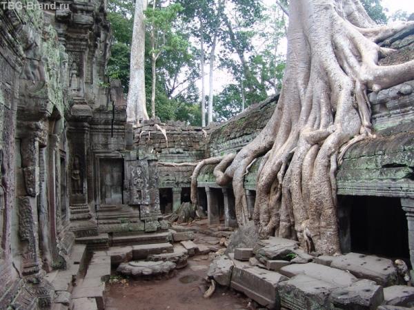 Храм Та пром - разрываемый корнями