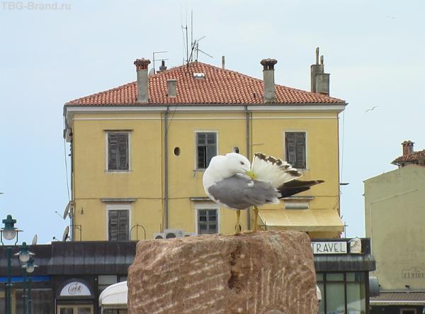 Птичка на пьедестале