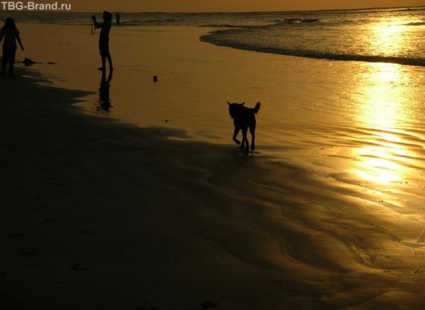 вечерняя прогулка по пляжу