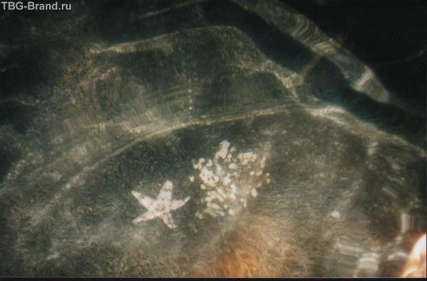 """Нашими """"мыльницами"""" запечатлеть представителей подводного мира сквозь призму морской воды."""