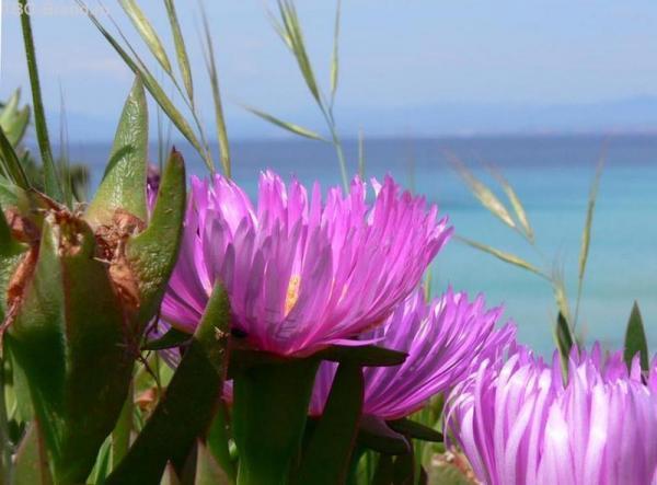 Цветы и море.