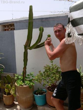 Бокс с кактусом.
