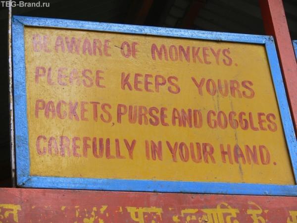 Надпись: боймтесь мартышек, держите карманы и очки...