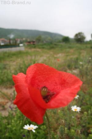 Чуть не забыл - цветочек для Светы