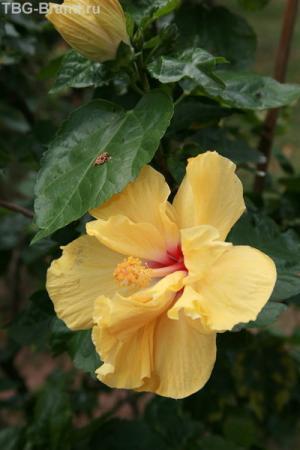 Ниу и на последок, традиционно, цветочег!