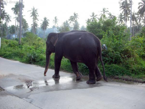 Одинокий слонег