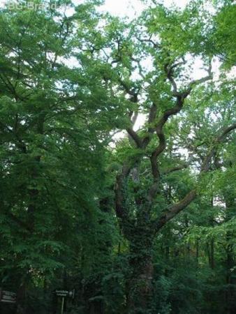 Дармштадт, лес