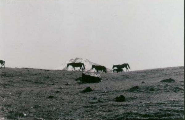 Памирские коники