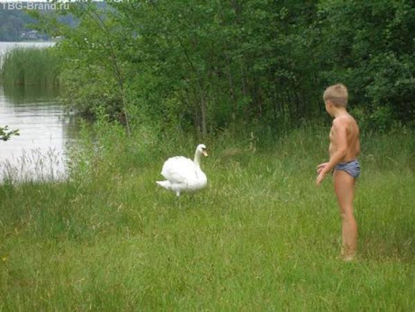 Так вот ты какой, гусь-лебедь!