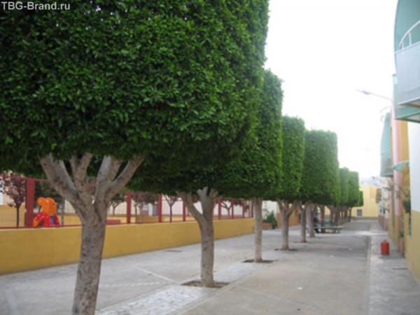 город Риоха - всего 3 улицы, а какая ляпота!