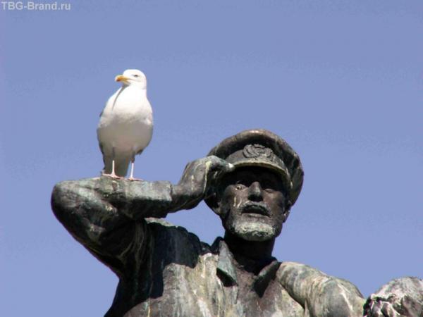 Моряк с чайкой