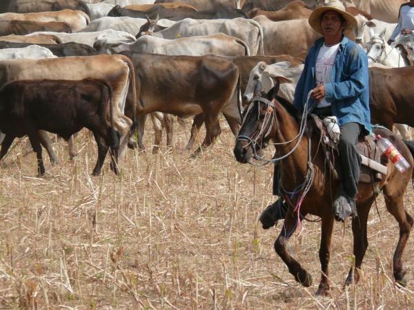 Никарагуанский ковбой