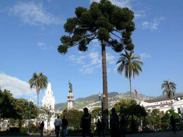 На Площади Независимости в Кито – тропическая растительность.