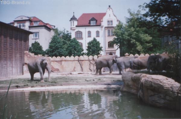 Слоновья парочка