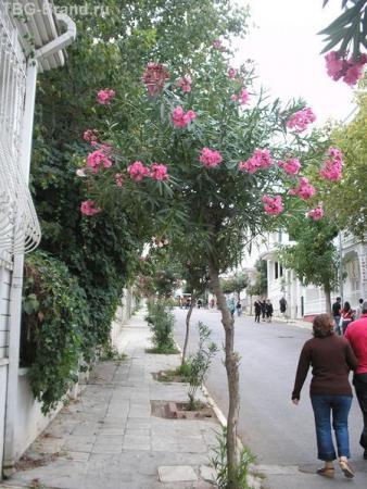 олеандровая улица