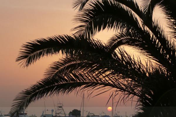 Пальмы - символ мусульманства
