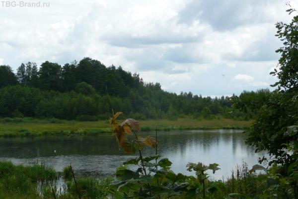 Небольшой пруд в лугах