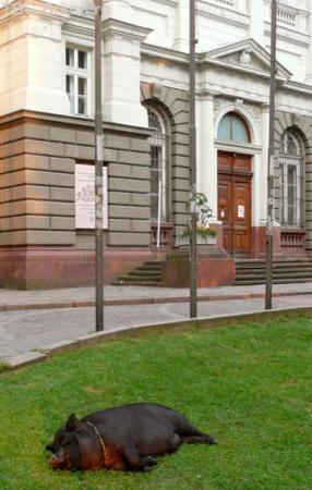 Хрюшка Маня у музея.