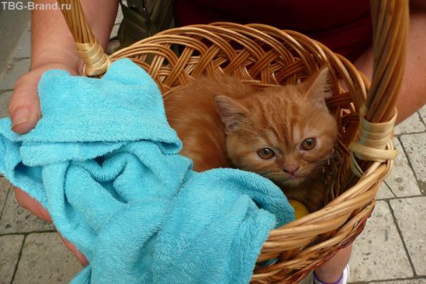 Лучше погладить рыжика и поговорить о кошках))