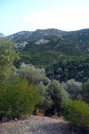 Серебристые оливы, ярко-зеленый лавр - типичный греческий пейзаж.