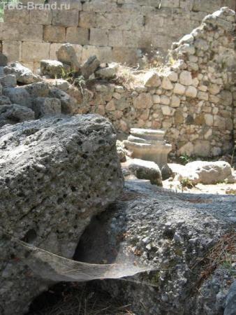 Паутина на руинах