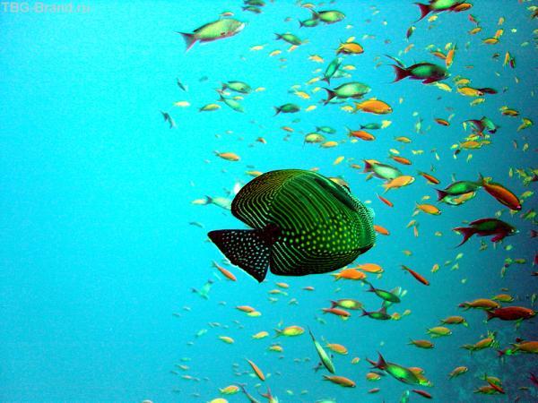 А это под водой 1