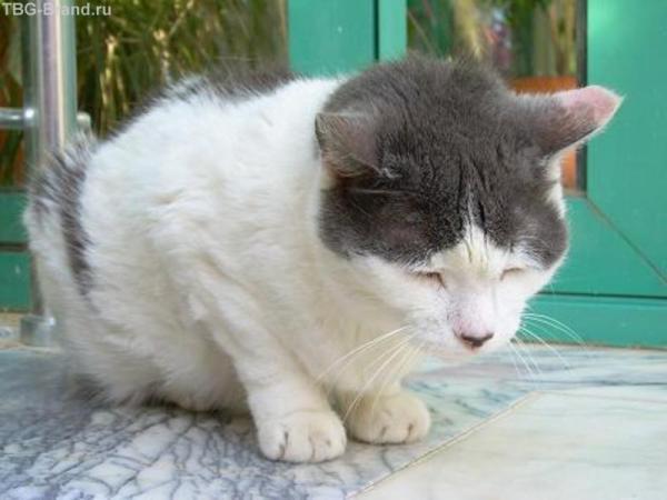 ленивый отельный кот