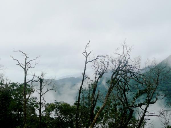Туман наступает