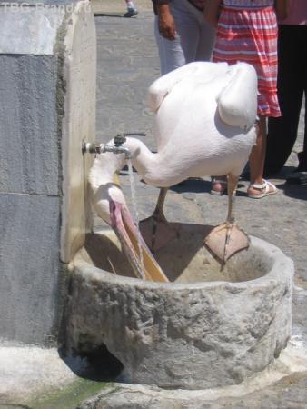 Пеликана посмотреть надо обязательно