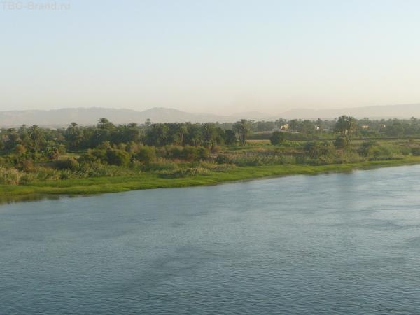 Да. да. Это зелень Египта