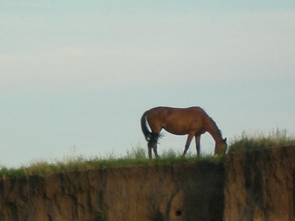 Уж очень мне конь понравился!