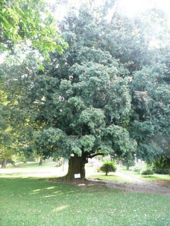 Чьё это дерево на следующей фото можно прочитать!
