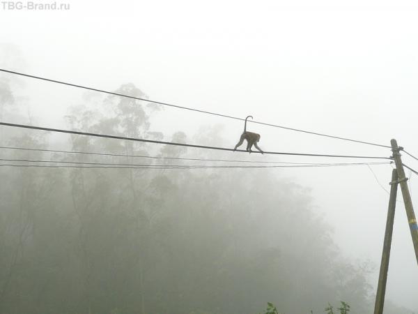 Ничего обезьянам-то не страшно!