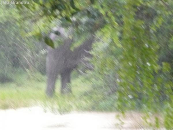 Попа слона