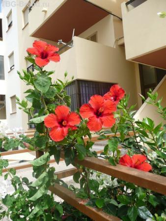 Цветы на каждом шагу