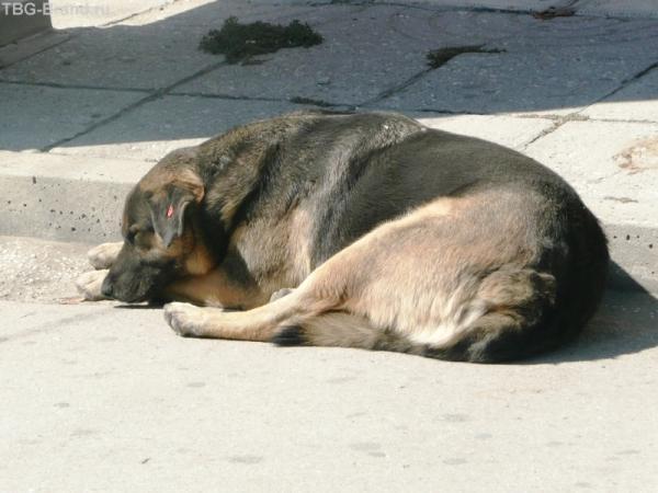 Местные бродячие собаки, но о каждой помнят