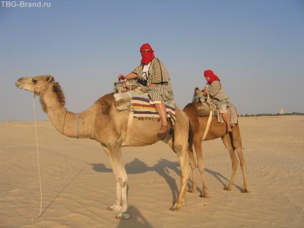 Я и верблюд (верблюд ниже)