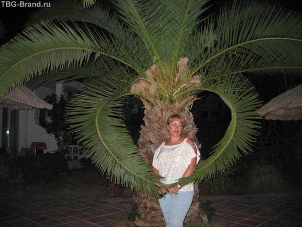 Все мое (и пальмовое) сердце