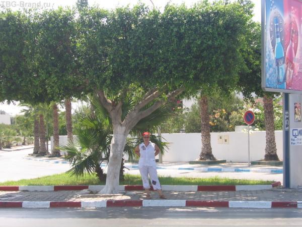 Тунисские уличные крыши