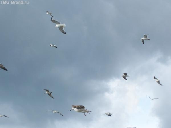 Нахальные стамбульские чайки