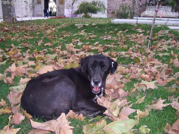 335 собака Стамбула :)