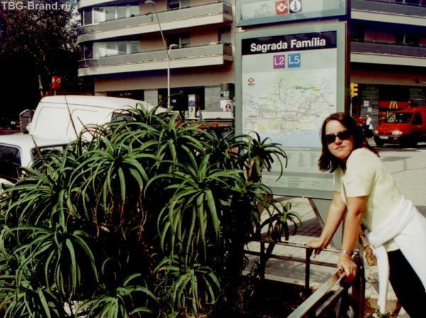 у входа в метро Саграда Фамилия - густая поросль Алоэ )) а на заднем плане неизменный макдональдс для голодных туристов ))