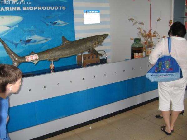 На фабрике акульего жира
