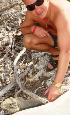 Остров игуан